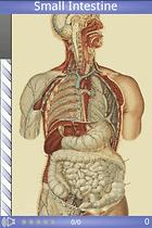 Speed Anatomy - Pour connaître le corps humain sur le bout des doigts