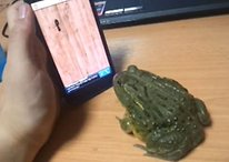 African Bullfrog + Ant Smasher For Android = OMG WTF