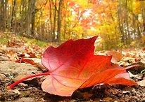 Llega el otoño: Android te ayuda a superarlo