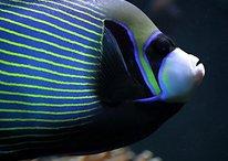 Google, i migliori pesci d'Aprile del 2013