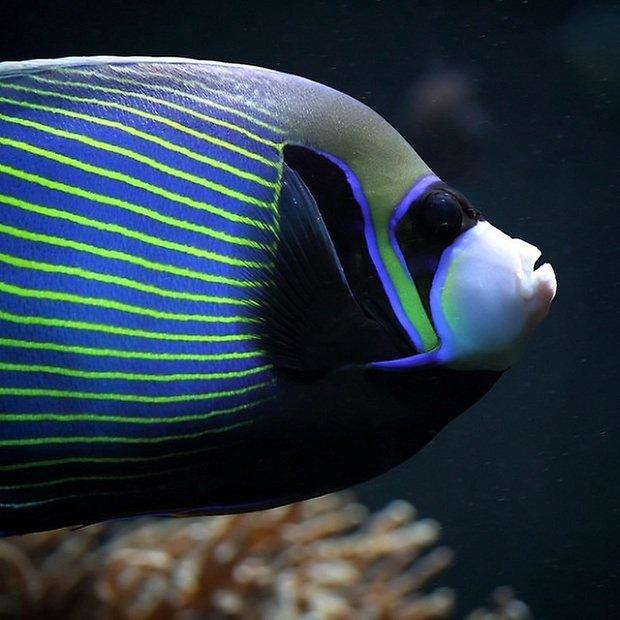google pesce d aprile