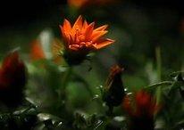 [Videos] Xperia Arc lässt die Blumen blühen, Xperia Neo schärft den Blick