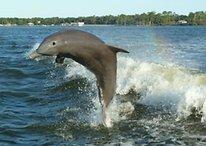 Astuce de la semaine - Dolphin, un super navigateur