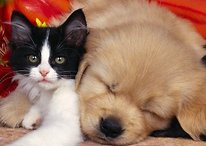 Top Apps and Gadgets for Pet Lovers