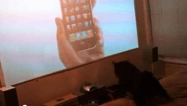 [Video] Meet the Littlest Android Fan in the World
