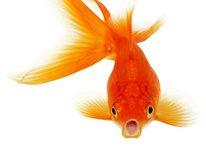 Top 5 des meilleurs poissons d'avril à faire avec votre Android