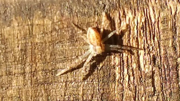 androidpit galaxy note 4 camera 11 zoom spider
