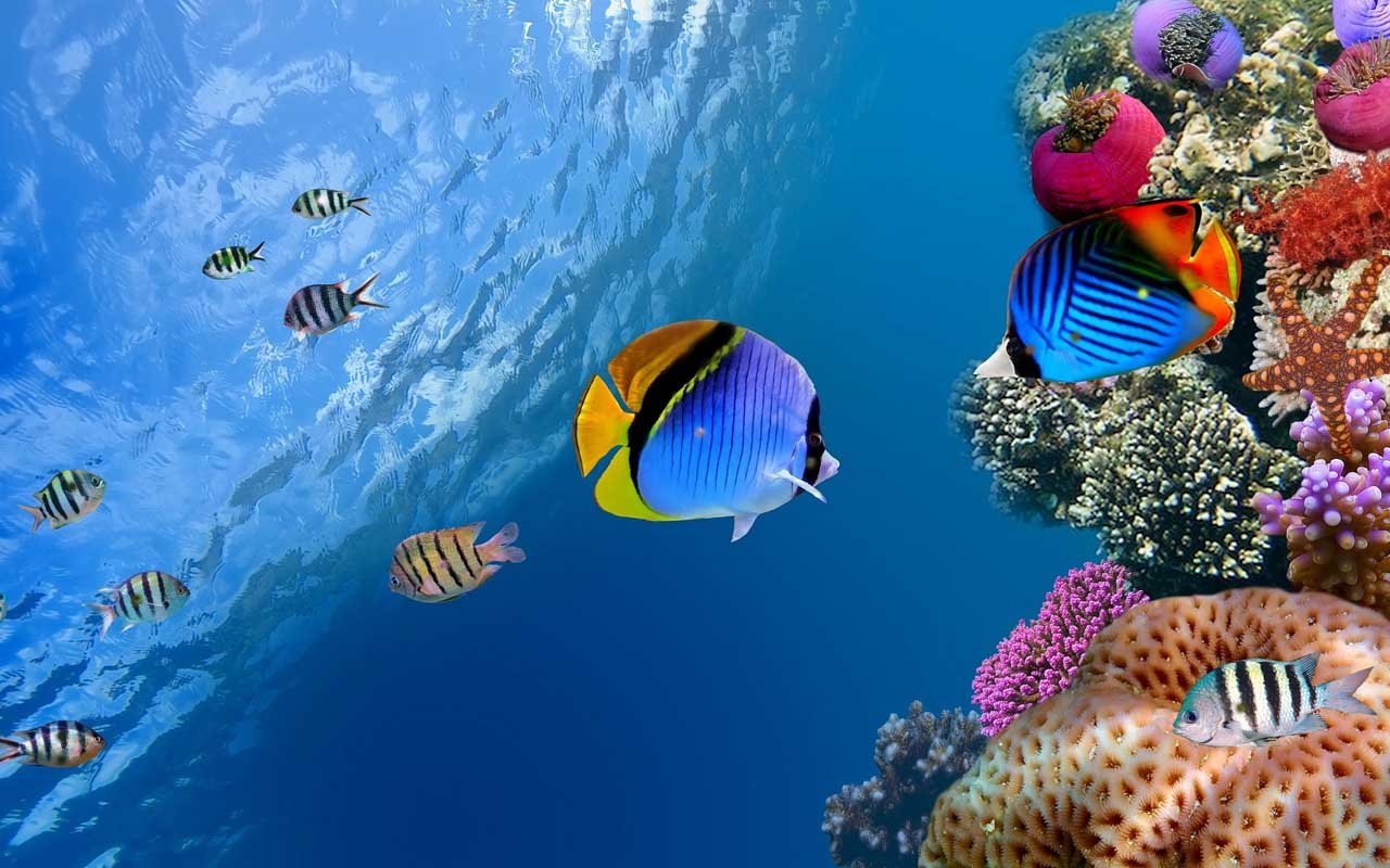 free hd wallpapers] marine life – android forum - androidpit