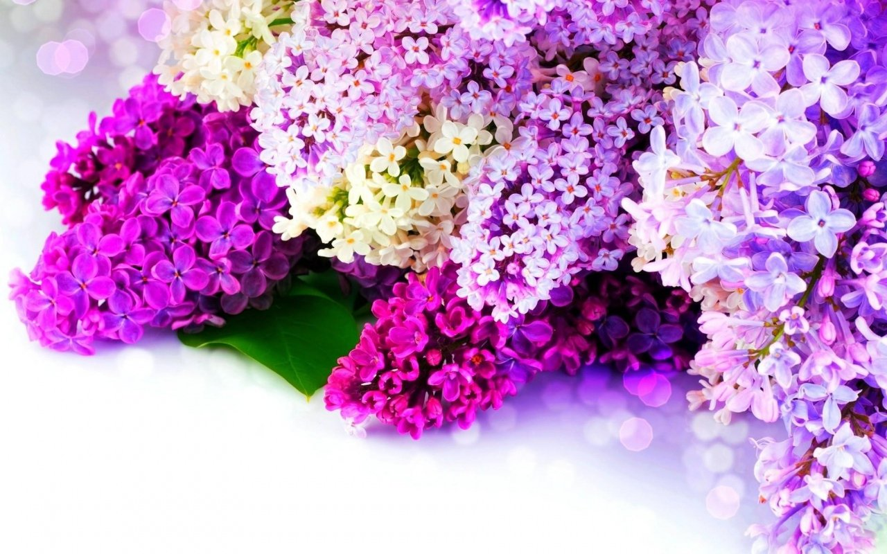 Free appspring live wallpaper get this spring live wallpaper and image image image image description spring live wallpaper mightylinksfo