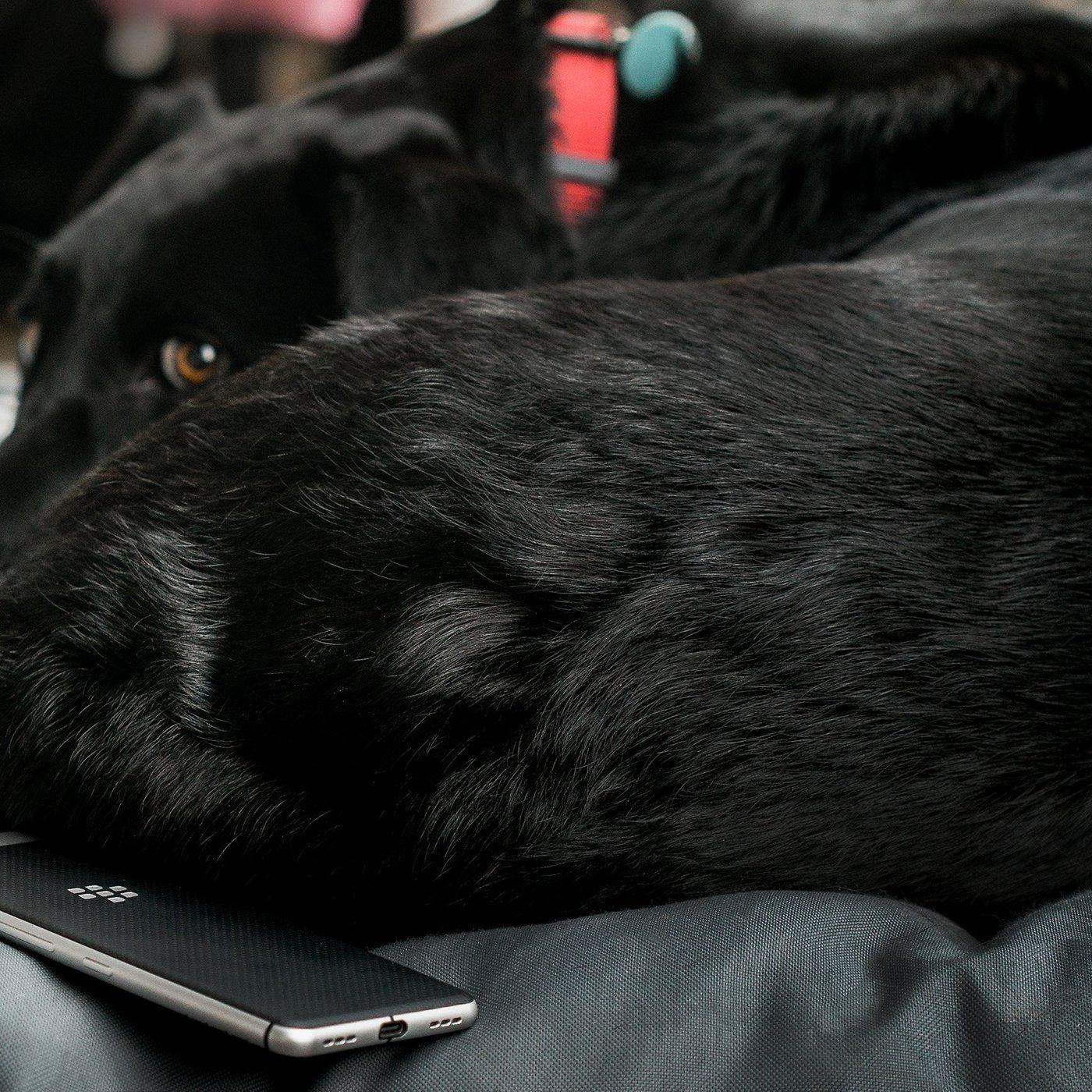 die lautlose hundehütte: das paradies für hunde an silvester