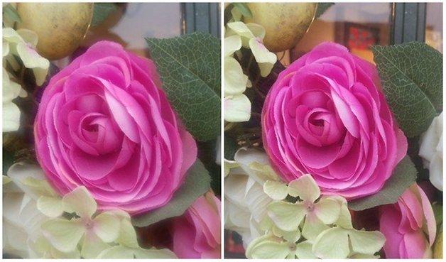 M9 Photo Comparison Flowers 640x376
