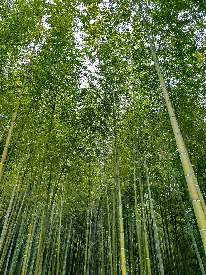 5 Bosque bambu