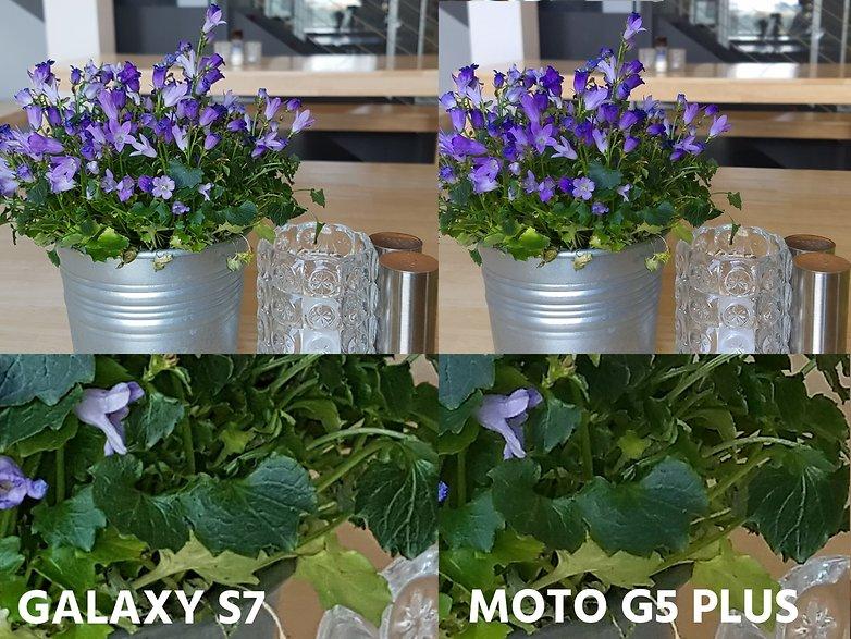 AndroidPIT camera comparation s7 vs moto g5 plus macro detail