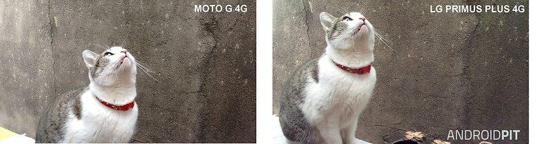 foto moto g vs prime plus dia