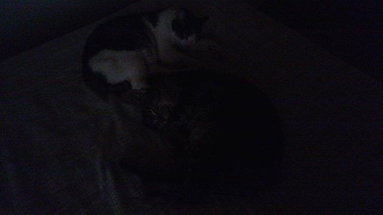 gatos maxx