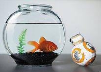 Sphero BB-8: Der Star-Wars-Droide mit Persönlichkeit