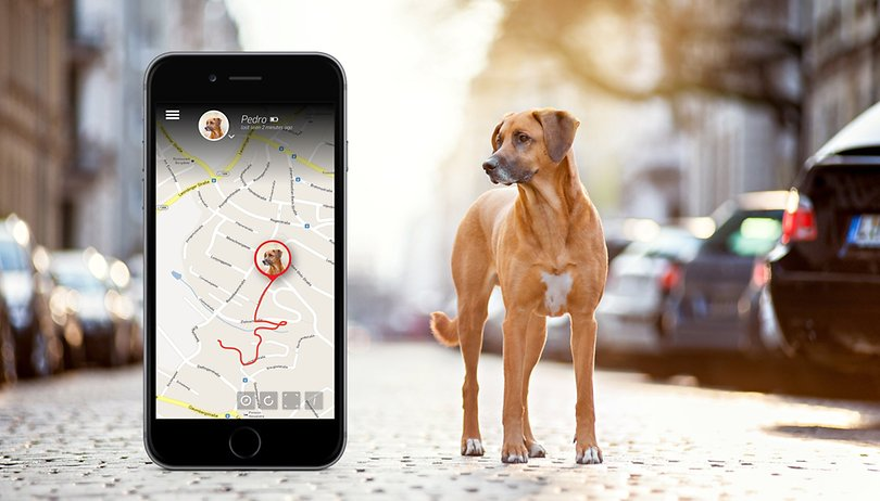 Deal: Tractive GPS pet tracker - 23% off
