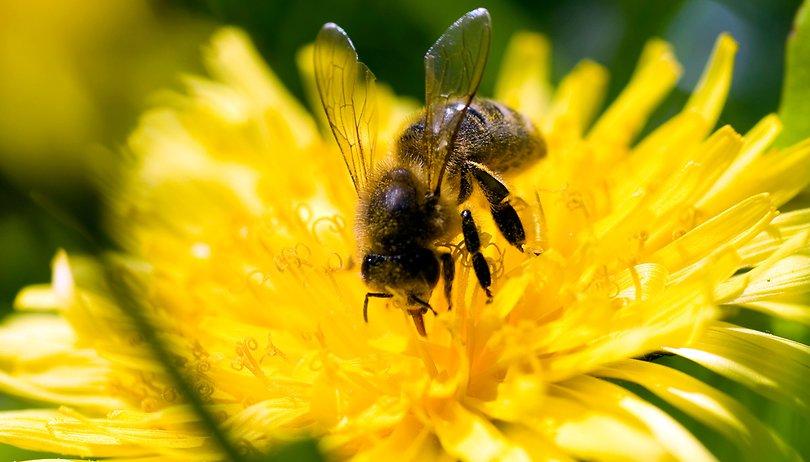 Esta inteligencia artificial podría salvar la vida de las abejas