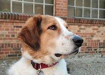 Una startup spiega come ritrovare un cane grazie alla foto del suo naso