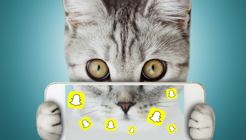 Snapchat becomes Snap-cat: prepare for a feline invasion