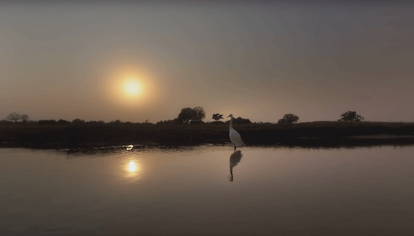 Travel to the African wetlands with National Geographic's VR