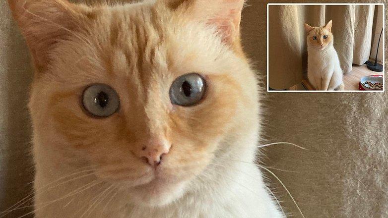 AndroidPIT apple iphone se 2 qualité d'image chat détail lumière inférieure