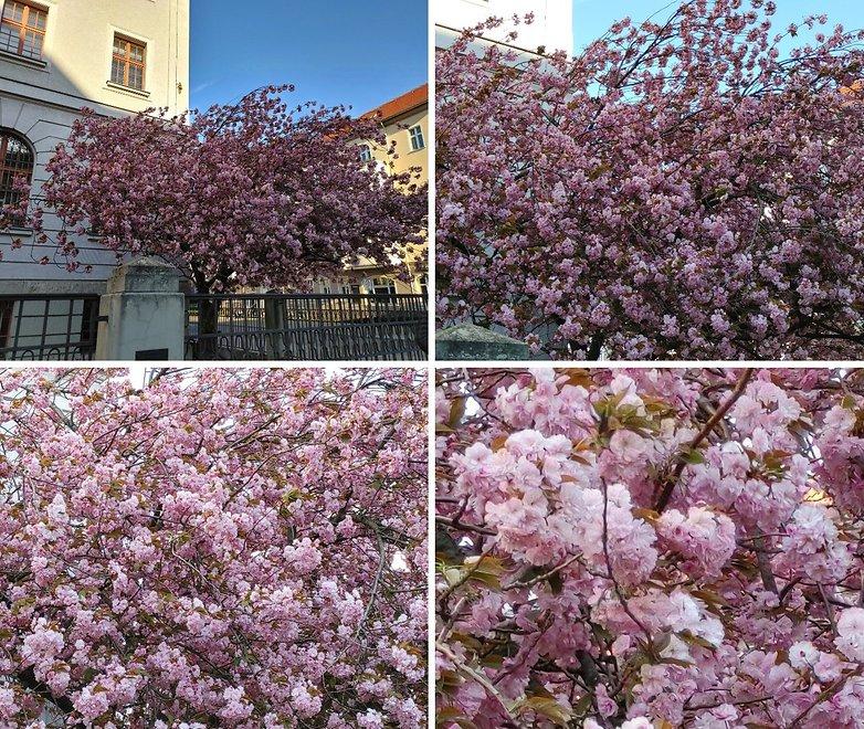lg v60 zoom flowers