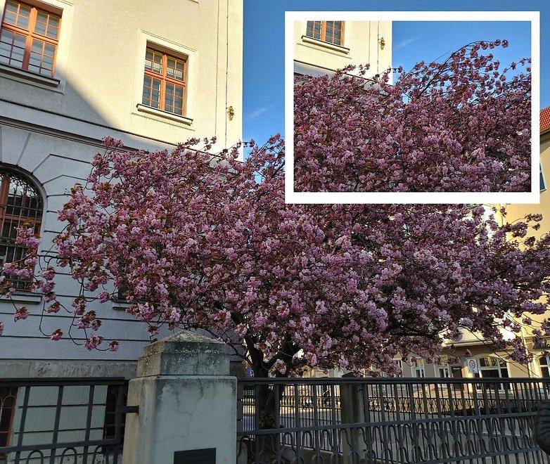 lg v60 zoom flowers 2