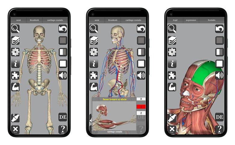 3D Anatomy NextPit