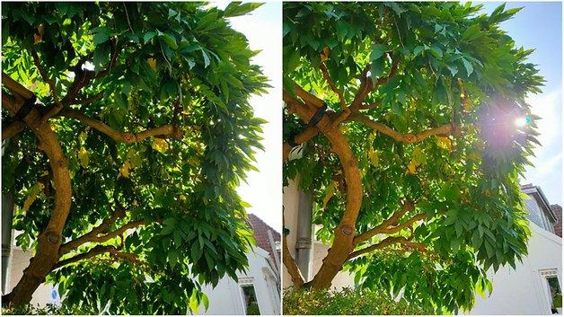 HDR-Vergleich anhand eines Baumes.
