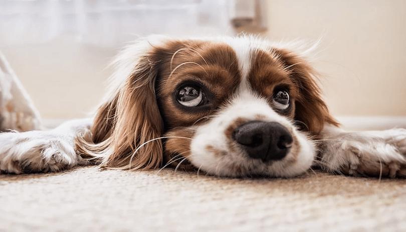 10 aplicativos essenciais para cuidar de seu cachorro - totalmente gratuitos