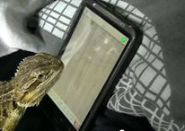 I Haz Video Games? Bearded Dragon Shows Off Android Gaming Skills